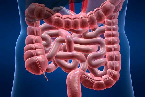 Les intestins et leur pouvoir sur votre bien-être